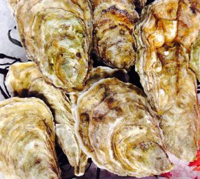 Fresh Fin D'Claire Oysters